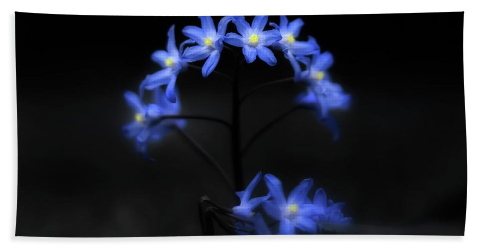 Spring Bath Sheet featuring the photograph Spring Dance by Evelina Kremsdorf