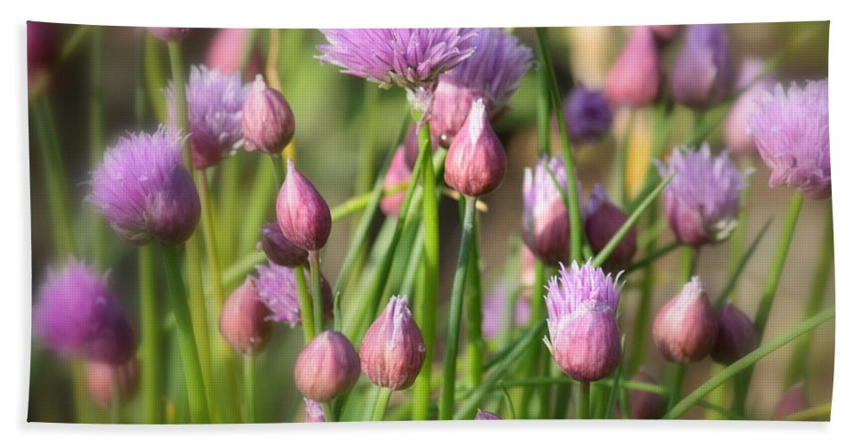 Chive Hand Towel featuring the photograph Spring Dreams by Carol Groenen