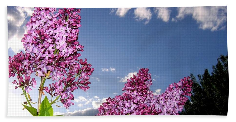 Spring Bath Sheet featuring the photograph Spring Evening by Will Borden