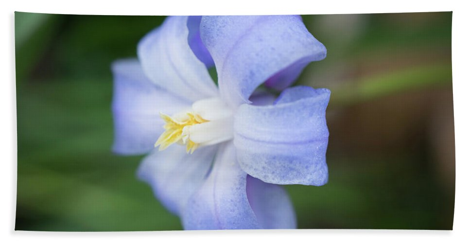 Spring Flowers Bath Sheet featuring the photograph Spring Flower by Lilia D