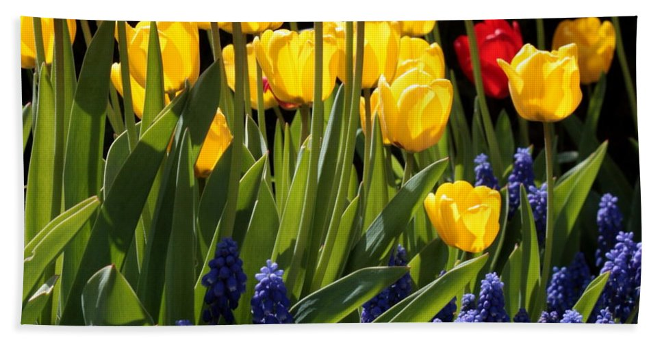 Spring Hand Towel featuring the photograph Spring Flowers Square by Carol Groenen