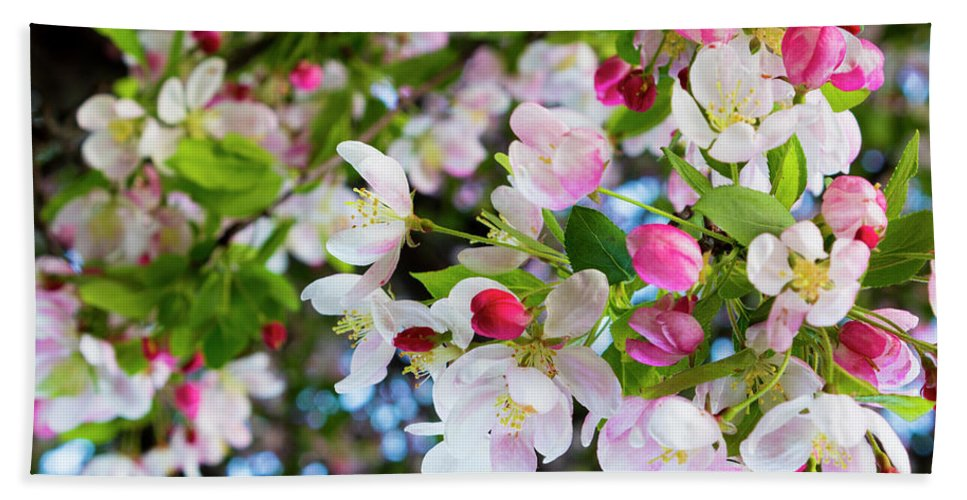 Cherry Blossoms Hand Towel featuring the photograph Spring Has Sprung by Denise Harty
