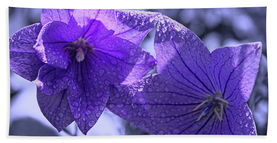 Purple Balloon Flowers Hand Towel featuring the photograph Spring Hope by Cathy Beharriell