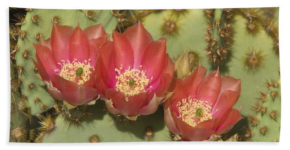 Southwest Bath Sheet featuring the photograph Spring In Arizona by Sandra Bronstein