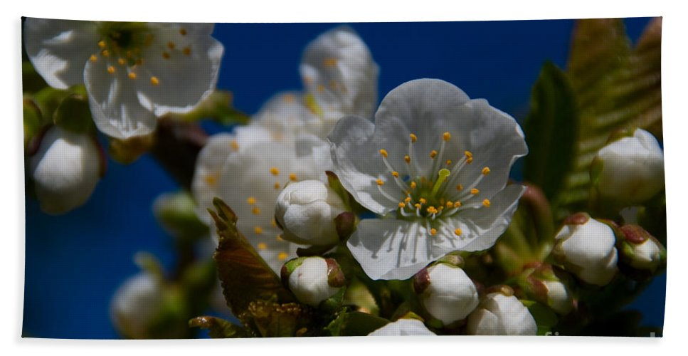 Beauty In Nature Hand Towel featuring the photograph Spring Is Here by Venetta Archer