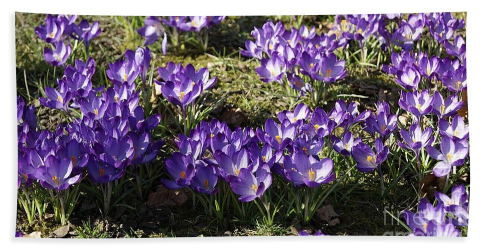 Spring Crocus Hand Towel featuring the photograph Spring by LDS Dya
