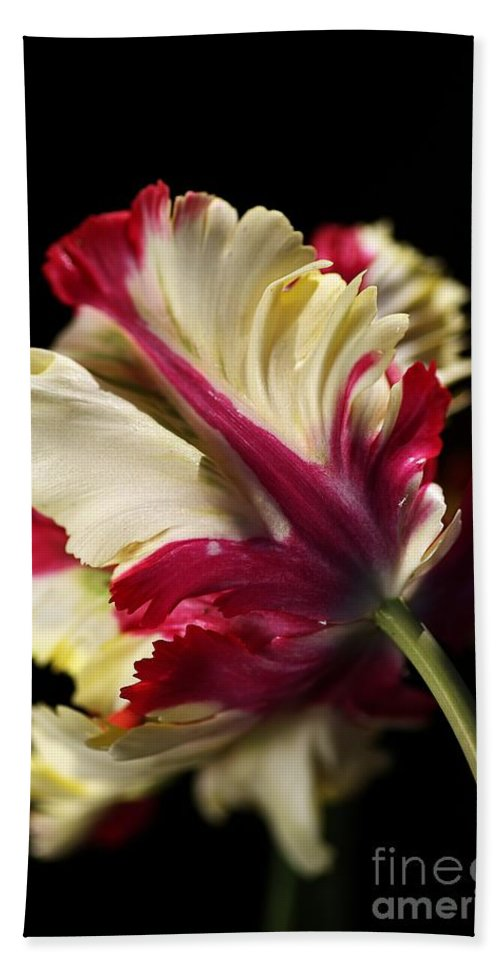 Parrot Tulip Bath Towel featuring the photograph Spring Parrot Tulip by Joy Watson