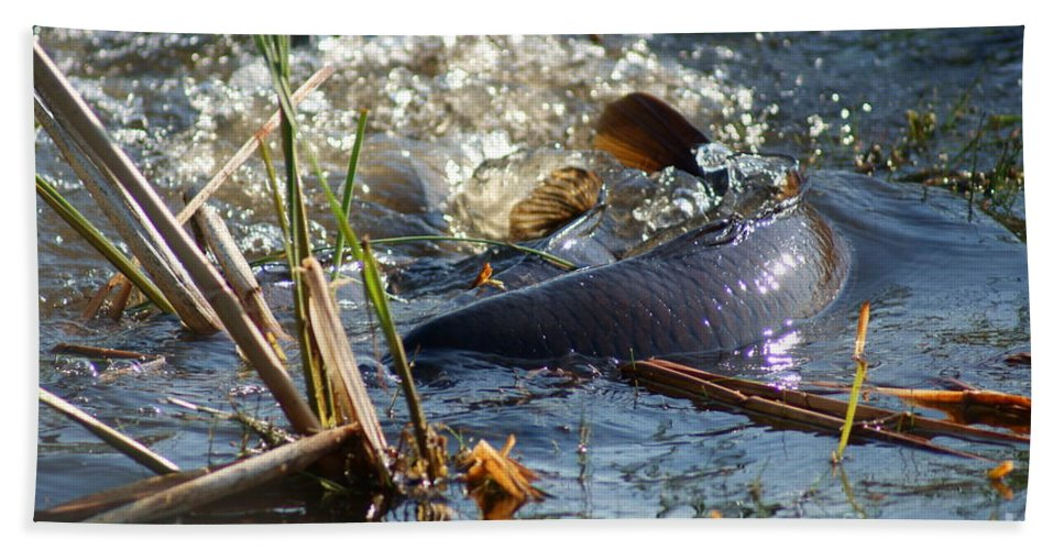 Carp Fish Spawning Bath Towel featuring the photograph Spring Spawn by Joanne Smoley