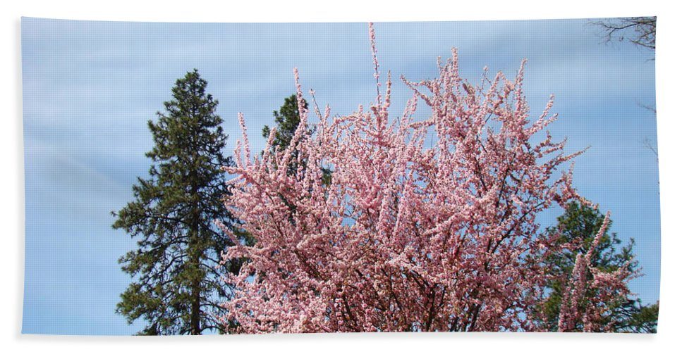 Trees Bath Towel featuring the photograph Spring Trees Bossoming Landscape Art Prints Pink Blossoms Clouds Sky by Baslee Troutman