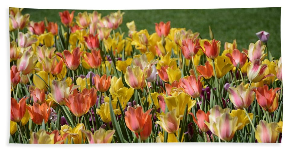 Hand Towel featuring the painting Spring Tulips by Constance Woods