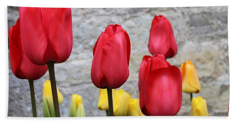 Tulips Hand Towel featuring the photograph Spring Tulips by Lauri Novak