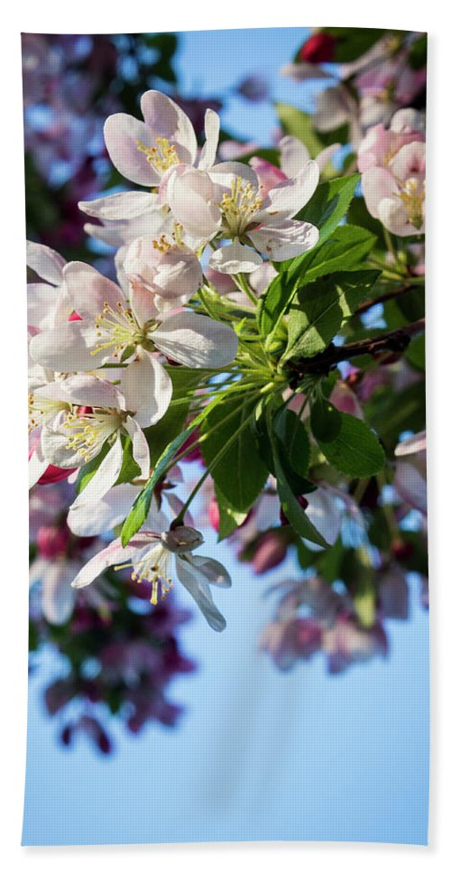 Springtime Hand Towel featuring the photograph Springtime In Bloom by Denise Harty