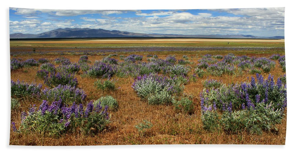 Landscape Bath Sheet featuring the photograph Springtime In Honey Lake Valley by James Eddy