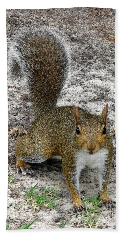 Squirrel Hand Towel featuring the photograph Squirrel 4 by J M Farris Photography