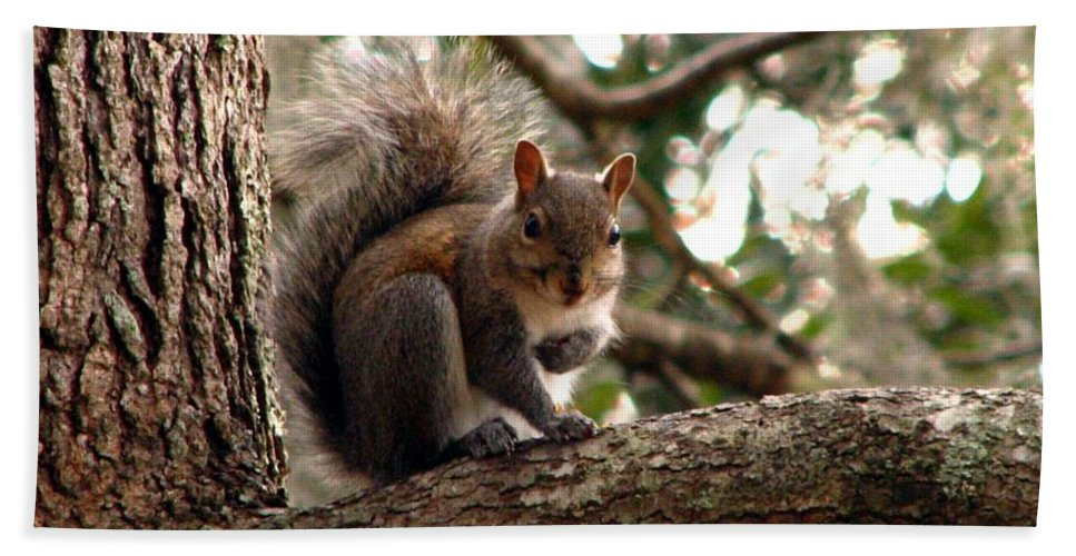 Squirrel Bath Sheet featuring the photograph Squirrel 8 by J M Farris Photography