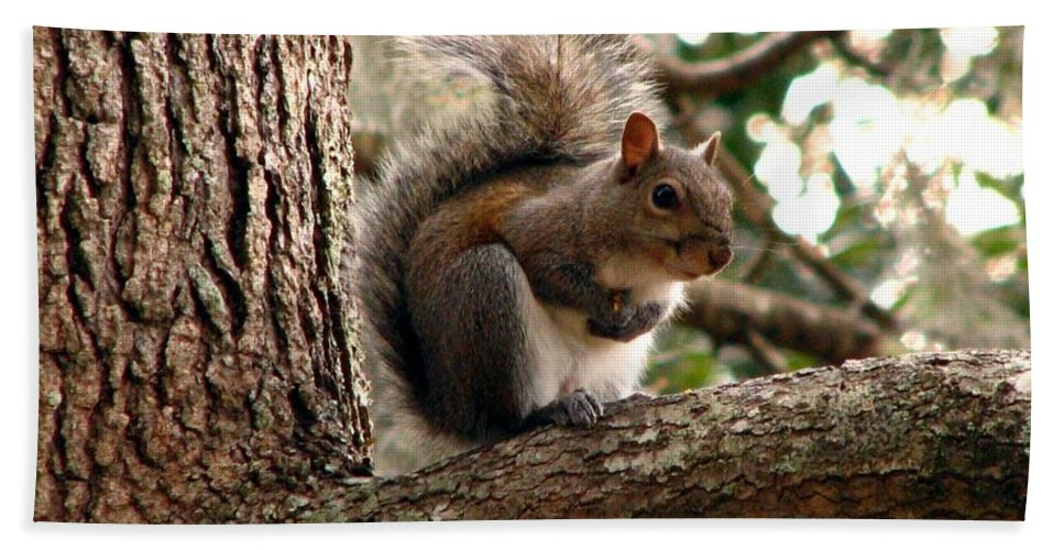 Squirrel Bath Sheet featuring the photograph Squirrel 9 by J M Farris Photography