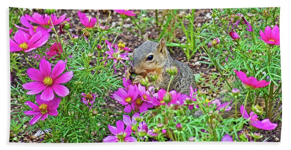Squirrel Among Coreopsis In Huntington Gardens In San Marino Hand Towel featuring the photograph Squirrel Among Coreopsis In Huntington Gardens In San Marino-california  by Ruth Hager