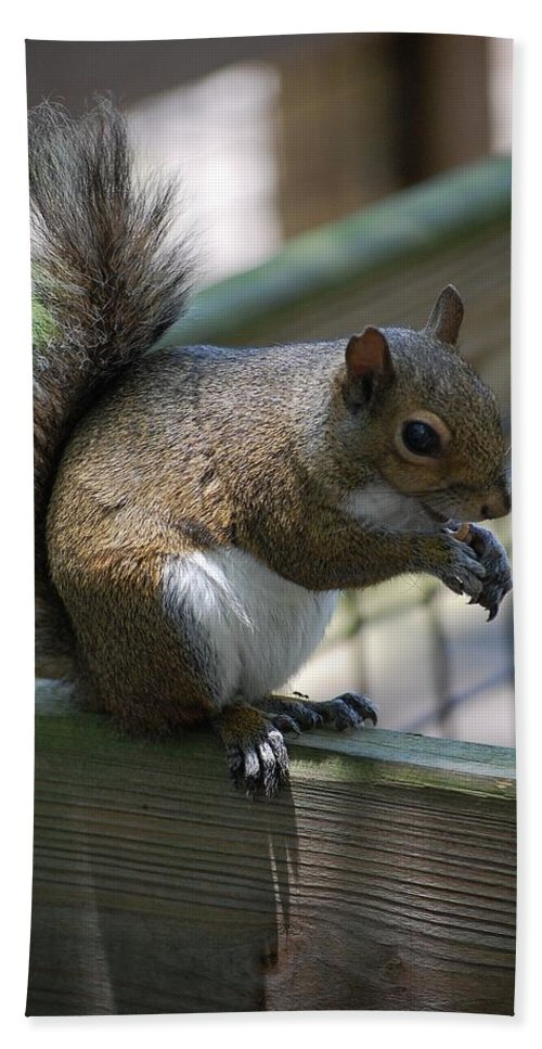 Squirrel Bath Sheet featuring the photograph Squirrel II by Robert Meanor