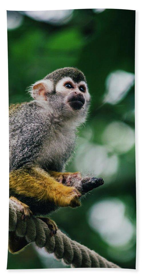 Squirrel Monkey Bath Sheet featuring the photograph Squirrel Monkey Looking Up by Pati Photography