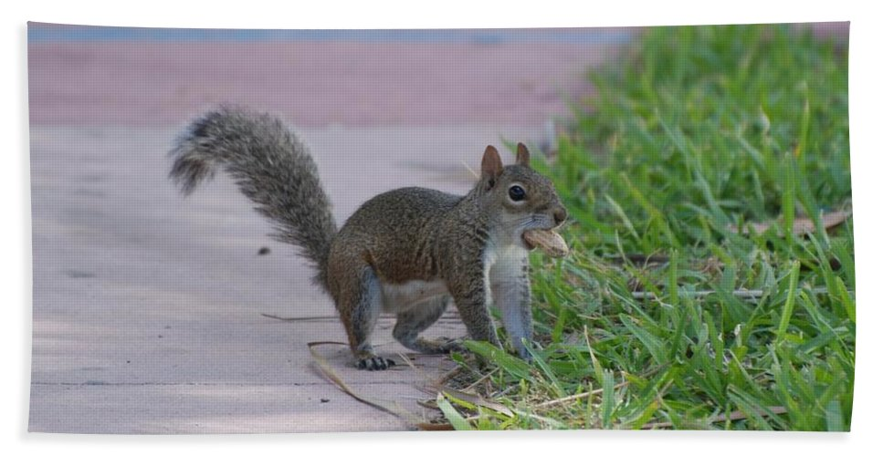 Squirrels Hand Towel featuring the photograph Squirrel Nuts by Rob Hans