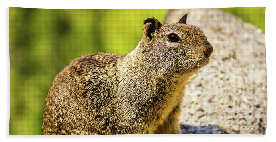 Nature Hand Towel featuring the photograph Squirrel On The Rock by Mirko Chianucci