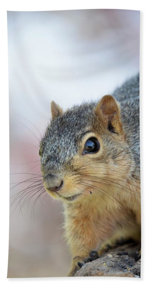 Sun Hand Towel featuring the photograph Squirrel Portrait by Bonfire Photography