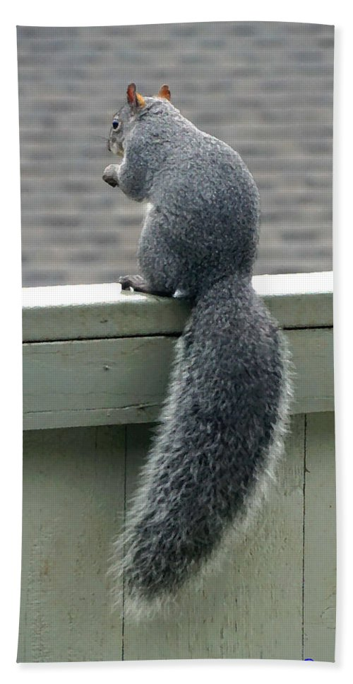 Squirrel Hand Towel featuring the photograph Squirrelart #2 by Ben Upham III