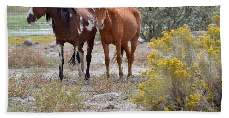 Virginia Range Mustangs Bath Sheet featuring the photograph Stallion And Mare by Sagittarius Viking