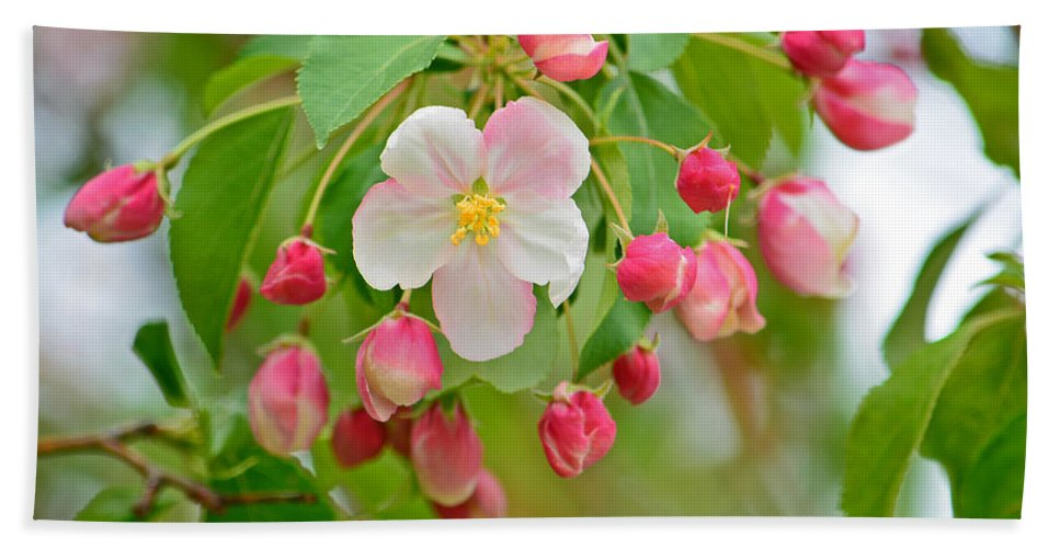 Stand Alone Japanese Cherry Blossom Hand Towel featuring the photograph Stand Alone Japanese Cherry Blossom by Emmy Vickers