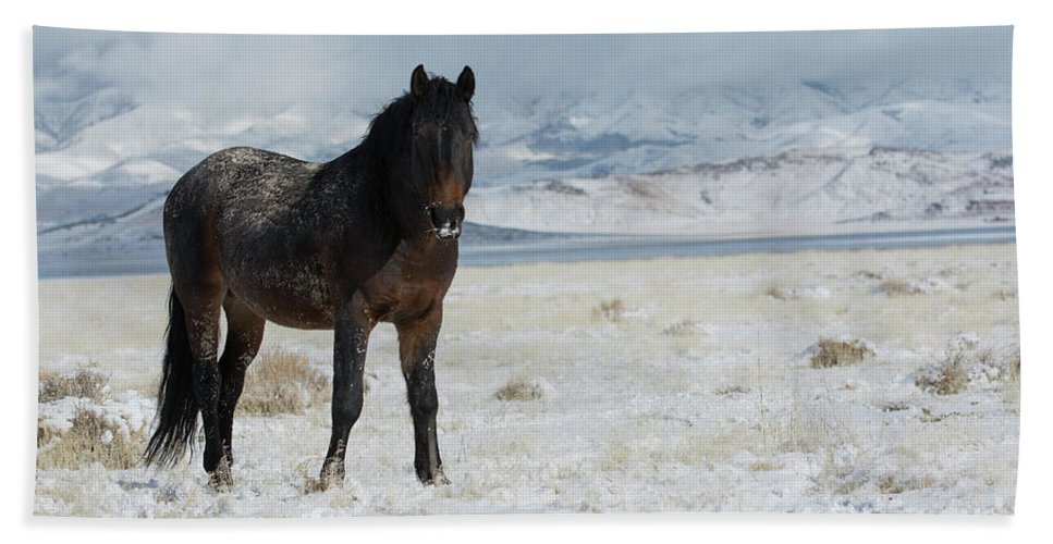 Wild Mustang Hand Towel featuring the photograph Stand Still by Nicole Markmann Nelson
