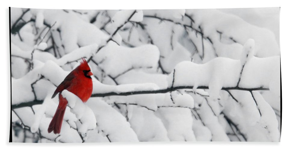 Photography Photographer Cardinal Red Bird Snow Season White Winter Scene Hand Towel featuring the photograph Standing Out by Shari Jardina