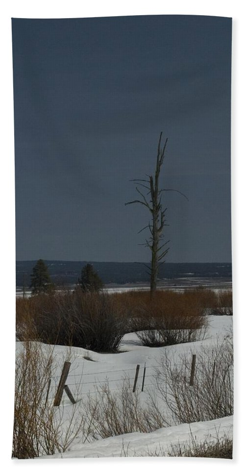 Dead Tree Hand Towel featuring the photograph Standing Tall by Sara Stevenson