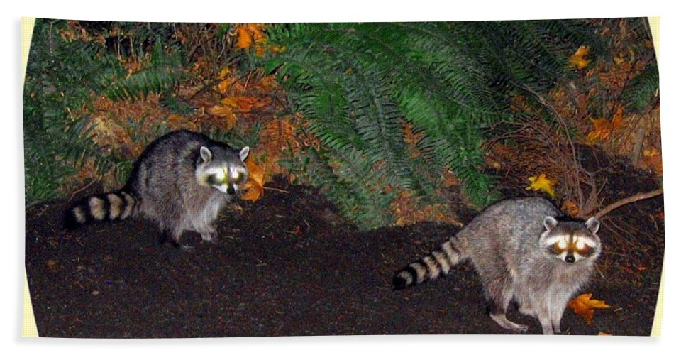 Raccoons Bath Sheet featuring the photograph Stanley Park Rascals by Will Borden