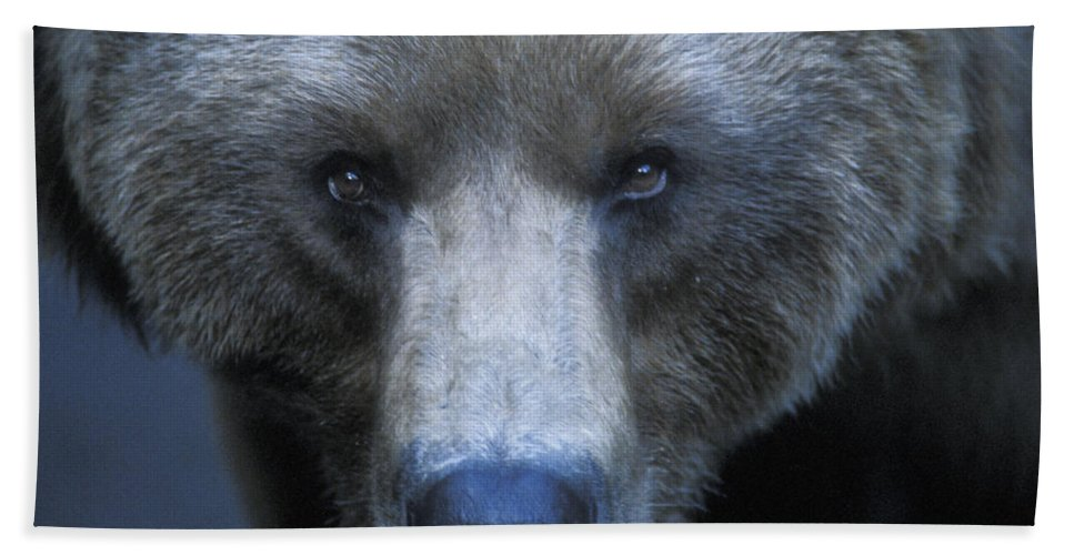 Yellowstone Hand Towel featuring the photograph Stare Down by Sandra Bronstein