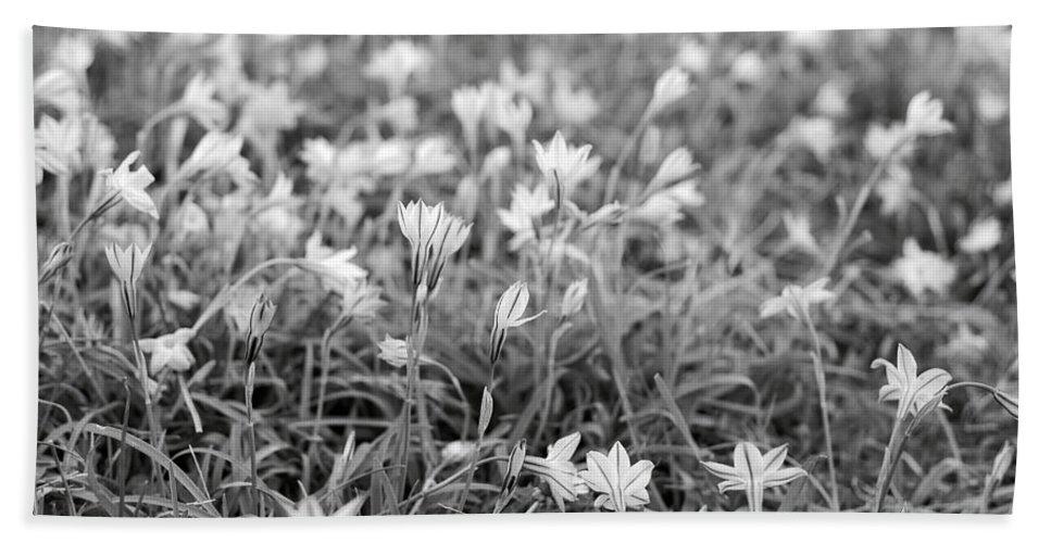 Star Flower Bath Towel featuring the photograph Starflower Spring Field by Rachel Morrison