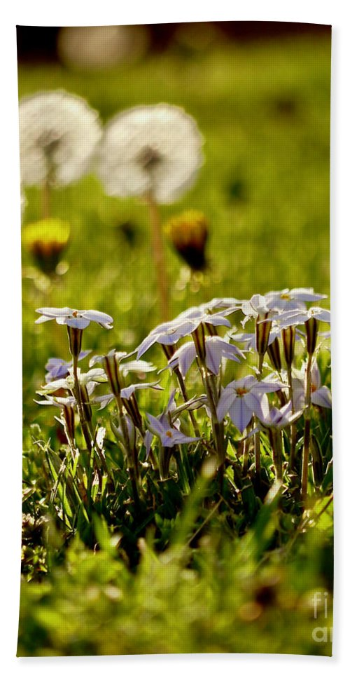 Star Flower Hand Towel featuring the photograph Stars And Dandelions by Rachel Morrison