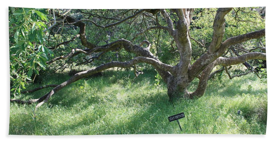 Tree Hand Towel featuring the photograph Stay On Path by Carol Groenen