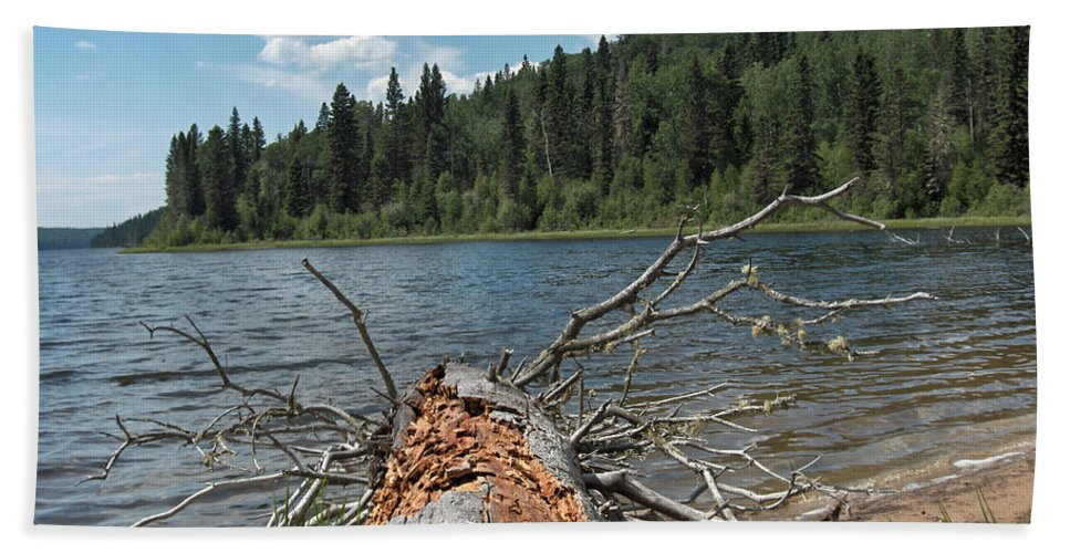 Water Lake Scenery Trees Wood Forest Driftwood Branches Shore Beach Bath Sheet featuring the photograph Steepbanks Lake The Fallen by Andrea Lawrence