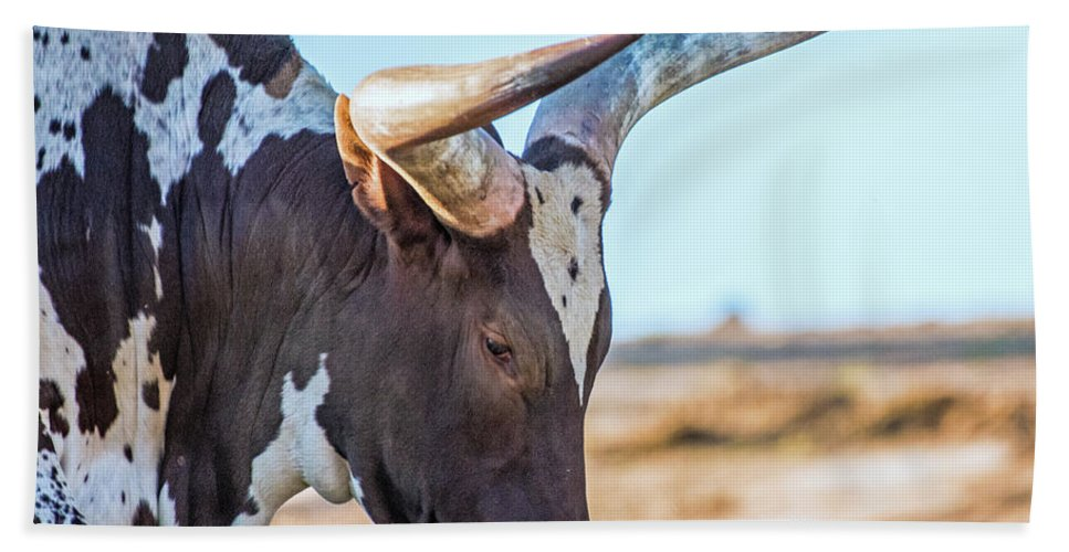 Steer Hand Towel featuring the photograph Steer Clear by Andrew Lelea
