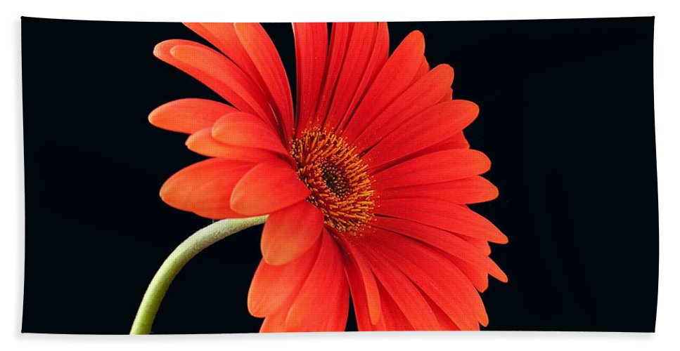 Flower Bath Towel featuring the photograph Stemming Beauty by Carol Milisen