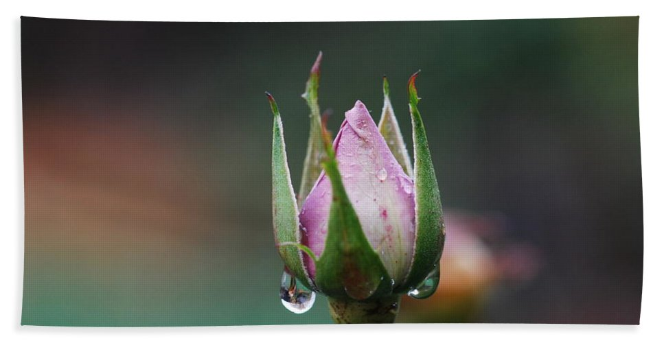 Rose Hand Towel featuring the photograph Sterling Rose by Donna Blackhall