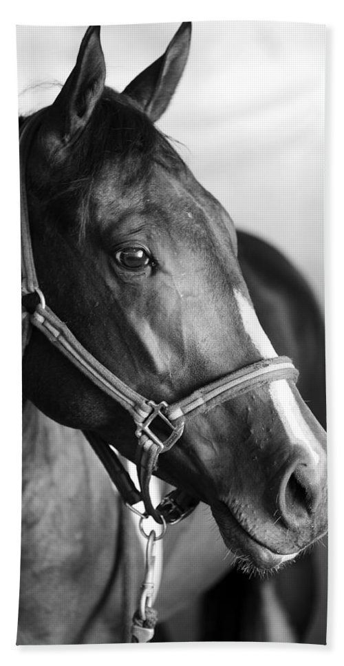 Horse Hand Towel featuring the photograph Horse And Stillness by Marilyn Hunt