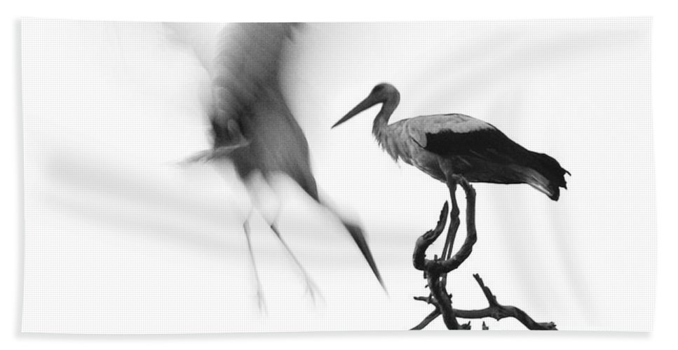 Stork Bath Towel featuring the photograph Storks by Nahum Budin