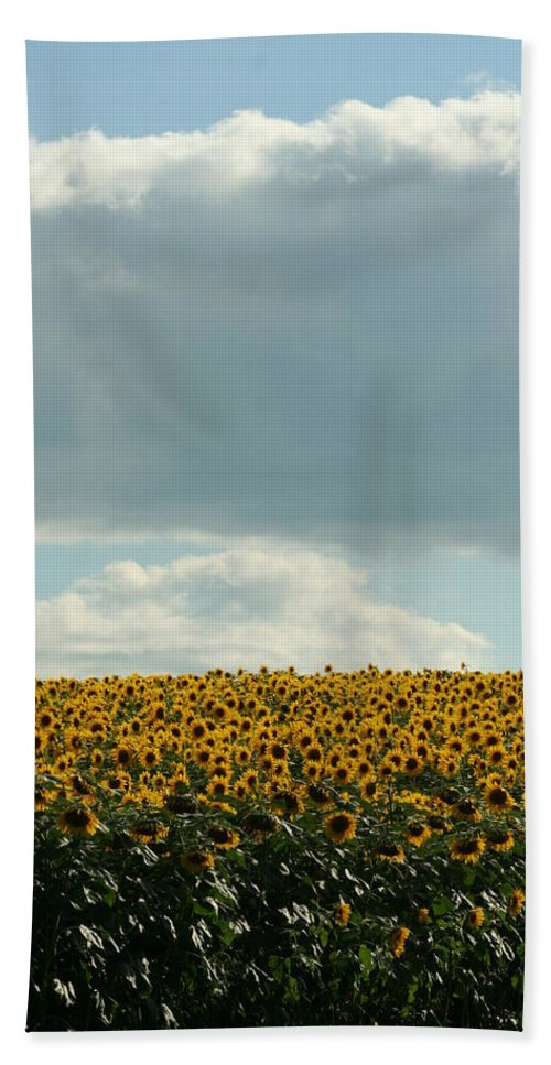 Sunflower Hand Towel featuring the photograph Storm Cloud Above Our Heads by Tammy Finnegan