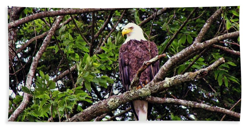 Eagle Bath Sheet featuring the photograph Strength by JAMART Photography