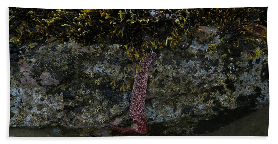 Starfish Hand Towel featuring the photograph Strength To Hold On by Gallery Of Hope