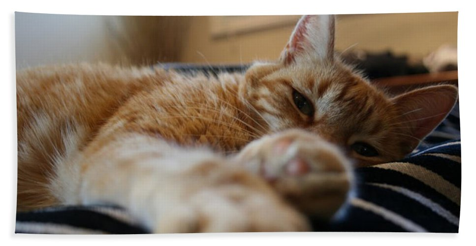 Stretching Bath Sheet featuring the photograph Stretching Cat by Prints365