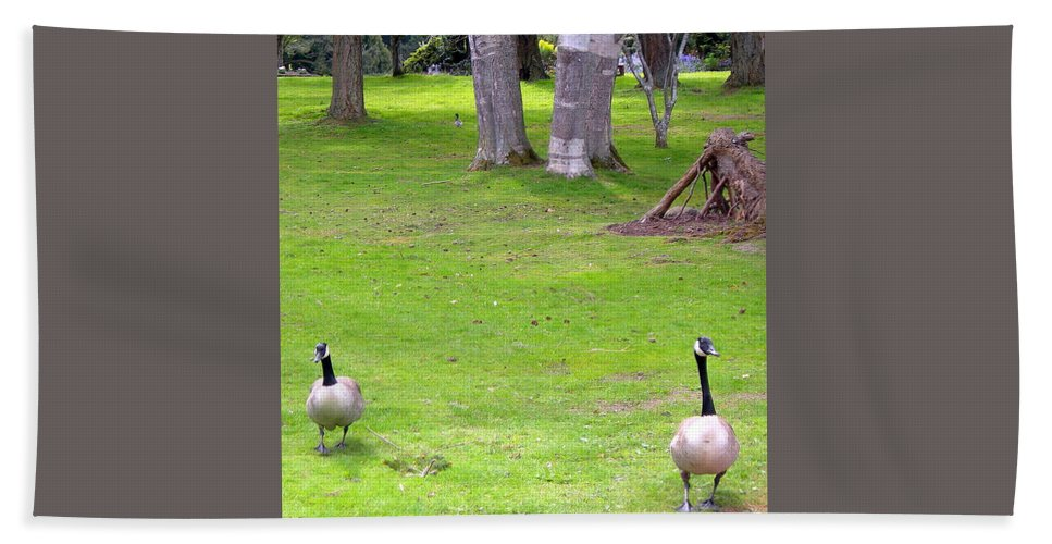 Canadian Goose Bath Sheet featuring the photograph Strolling Canadian Geese by Maro Kentros