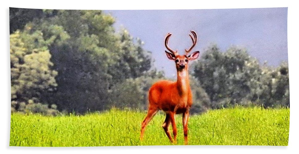 Wildlife Hand Towel featuring the photograph Stud by Greg Kear