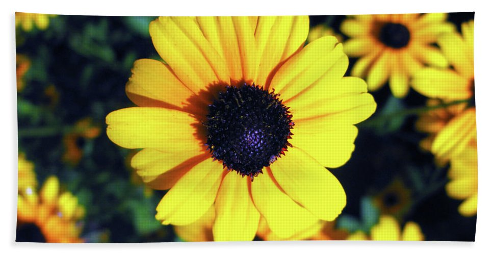 Flower Photograph Hand Towel featuring the photograph Stunning Black Eyed Susan by Brittany Horton